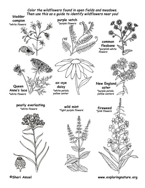 coloring pages field of flowers meadow wildflowers coloring page 1