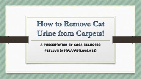 How To Remove Cat Urine From by Removing Cat Urine From The Carpet