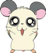 panda hamtaro wiki