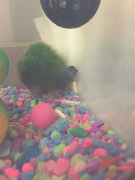 my is acting strange and hiding betta fish acting strangely my aquarium club