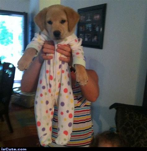 puppy pjs puppy in pajamas iscute
