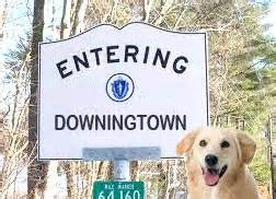 dog house thorndale pa downingtown pa pet walking and pet sitting service the