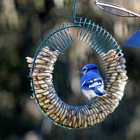 blue jay feeder flickr photo sharing