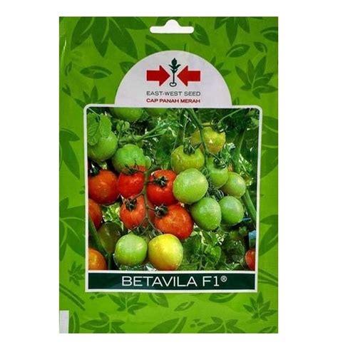 Benih Tomat Betavila F1 Cap Panah Merah benih tomat betavila f1 5 gram panah merah bibitbunga