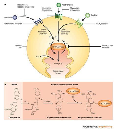 How Proton Inhibitors Work by Proton Inhibitors Johny Fit
