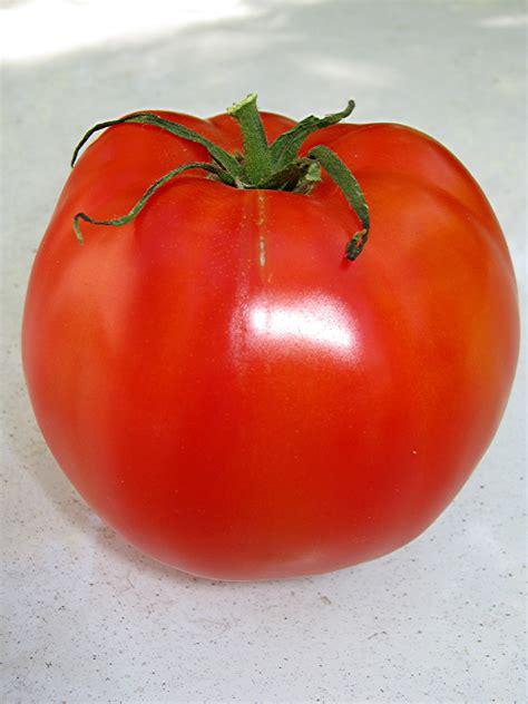 abraham lincoln tomato redwood barn nursery tomato season just around the corner