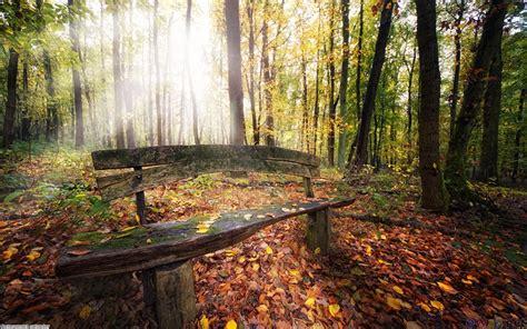 a wooden bench in the forest framtung wolsten