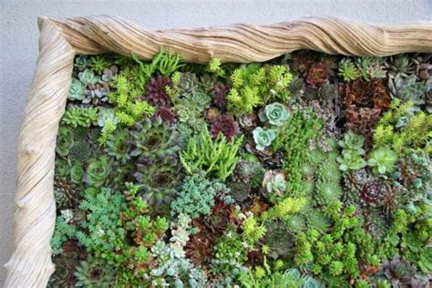 Vertical Garden Succulent Wall Panels Flora Grubb Panels Let You Design Your Own Vertical Garden