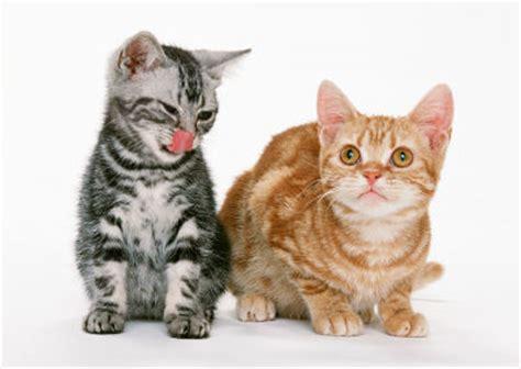alimentazione gatti piccoli alimentazione