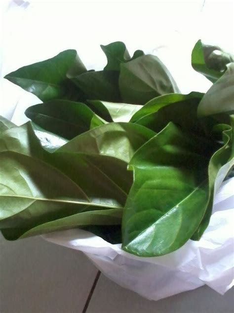 Teh Pucuk Yg Besar miss loly resepi masak lemak pucuk mengkudu