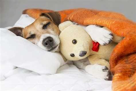 dogs and melatonin k9 of mine your care resource for a healthier happier canine