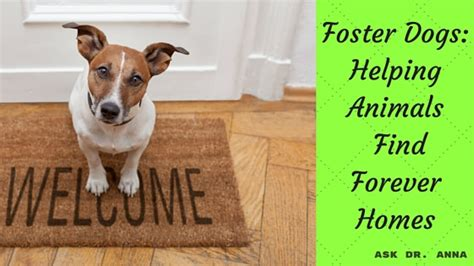 fostering dogs foster dogs helping animals find forever homes ask dr guthrie pet
