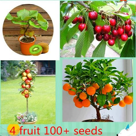 4 fruit tree garden plants picture more detailed picture about 4