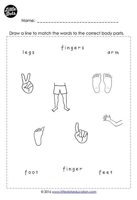 free body parts printable for preschool pre k and