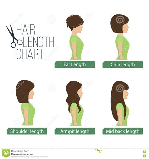 what is the best lenght of hair for a saggin jawline hair length chart side view stock vector illustration of