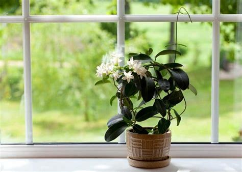 indoor vines  climbers   grow easily
