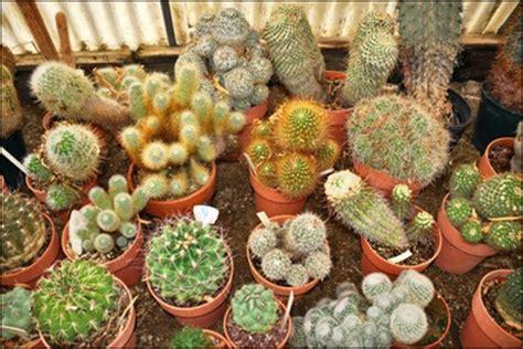Bienfaits Du Cactus Dans Une Maison by Les Plantes D 233 Polluantes Magazine Cheval Monchval Mag