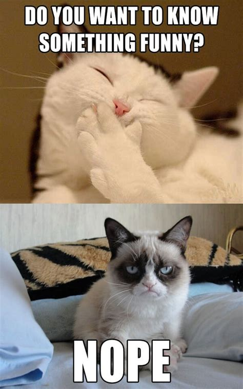 The Grumpy Cat Memes - do you want to know something funny nope tard the
