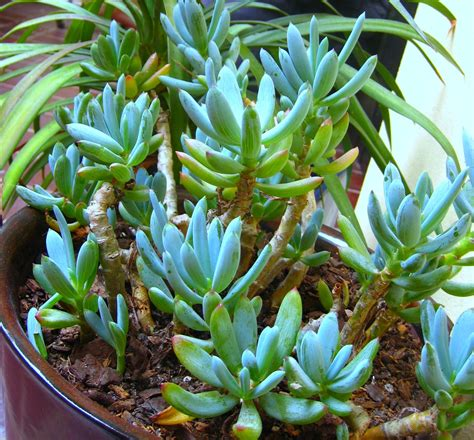 Whats New At The Succulent by Shnookies New Succulents By The Door