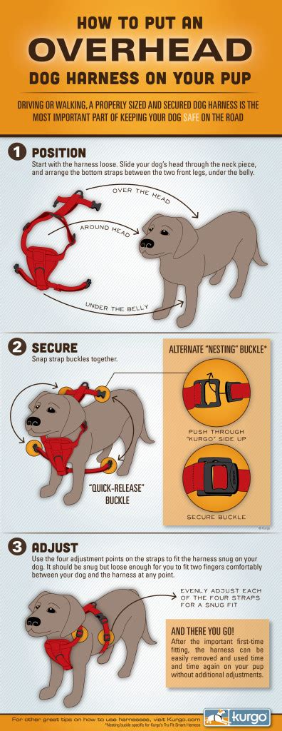 how to put a harness on a puppy do you how to properly put a harness on mybrownnewfies