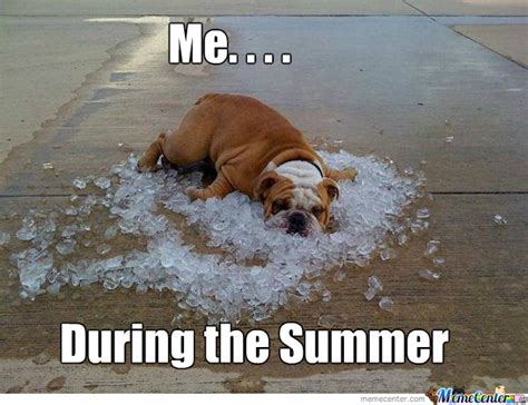 Summer Meme - summer life by exnorma meme center