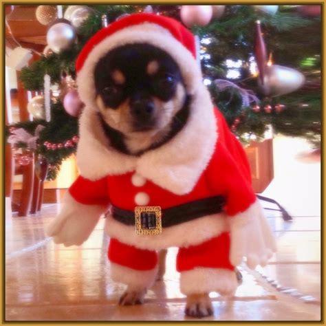 ver fotos para navidad ver imagenes de perros vestidos de navidad archivos imagenes de cachorros