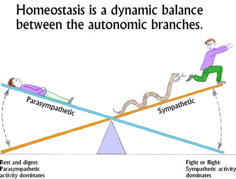 what is sectional balancing system image gallery homeostasis