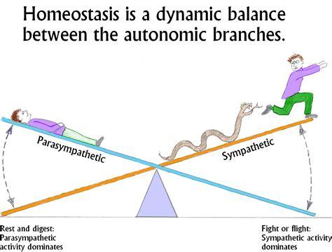 homeostasis autoregulation