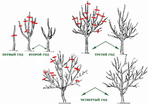pruning fruit tree how to prune a fruit tree
