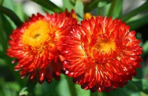 fiori per terrazzi fiori per terrazzi piante da terrazzo scegliere i