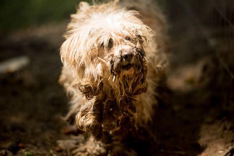 breaking news massive animal neglect case in georgia 183 a