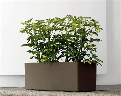indoor plant pot beautiful indoor plant containers ideas amazing house