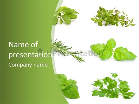 herb powerpoint themes herb basil cook powerpoint template id 0000042576