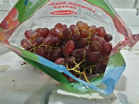 Bibit Anggur Crimson jual buah anggur crimson seedless grape harga murah