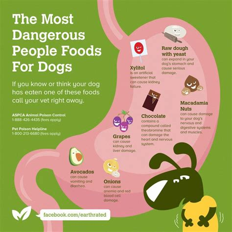 deadly foods for dogs 17 best images about fetching facts on names pets and animal shelter