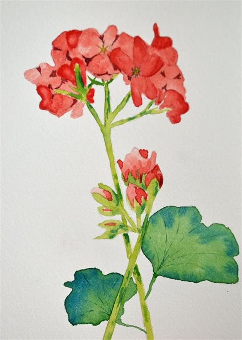 1000 images about geranium on watercolour morning flowers and window