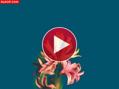 imagenes en movimiento en java gif flores en movimiento gif 311