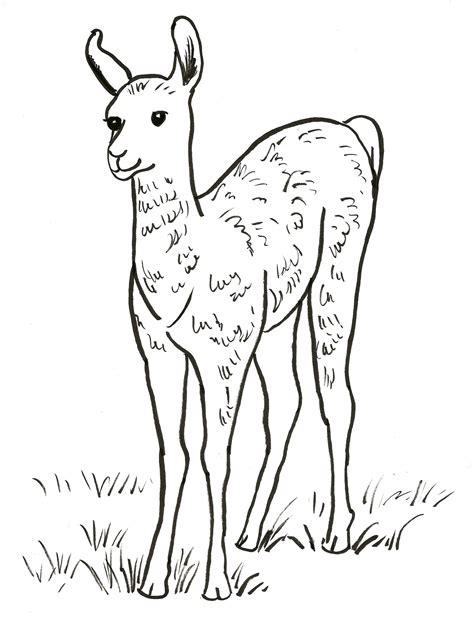 llama coloring pages llama coloring page bell