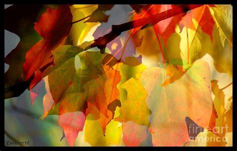 curtain fall curtain fall 2 by france laliberte