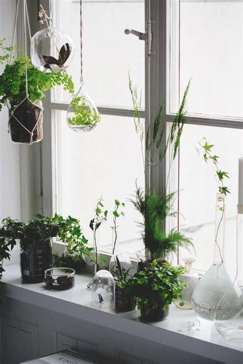 Plants For Windowsill Windowsill House Plants Ideas Seb Haus Hanging Plants