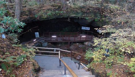 bosque aokigahara el bosque de los suicidios malditos jap 243 n y el quot bosque de los suicidios quot aokigahara fotos