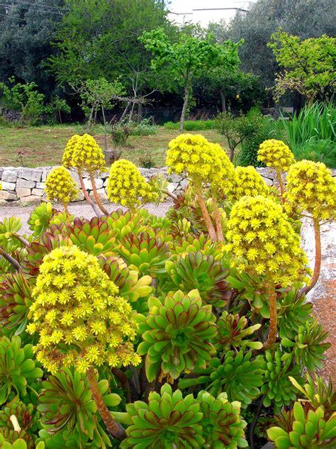piante fiori gialli fiori gialli foto immagini piante fiori e funghi