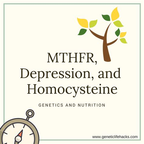 Mthfr A1298c Harder To Detox by Mthfr Depression And Homocysteine Levels Genetic Lifehacks
