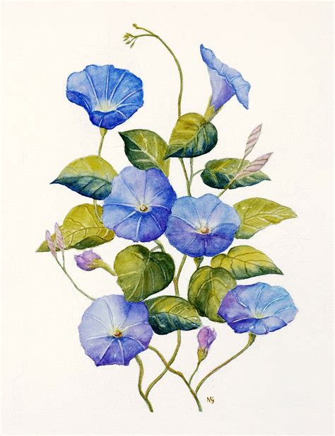 morning glory tattoo watercolor google search tattoos