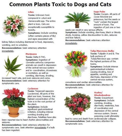 what plants are poisonous to dogs 17 best images about kills cats lilies