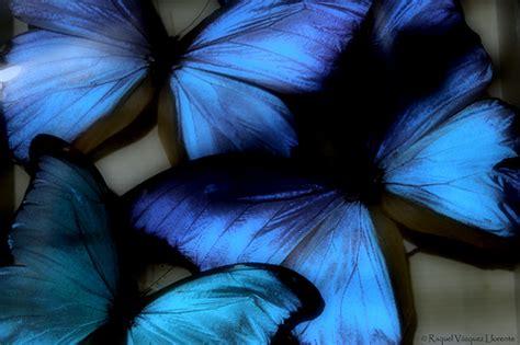 imagenes mariposas goticas naturaleza muerta ananadia95