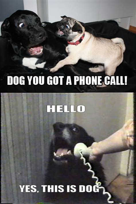 the phone dog hilarious meme remixes 9 pics