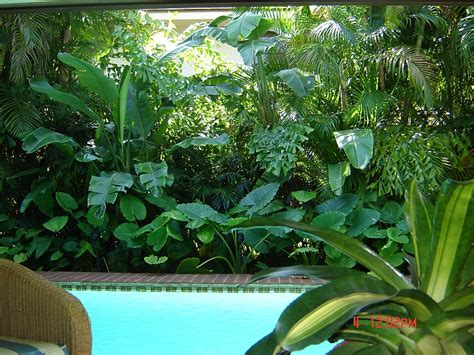 tropical landscaping ideas on pinterest tropical landscaping tropi
