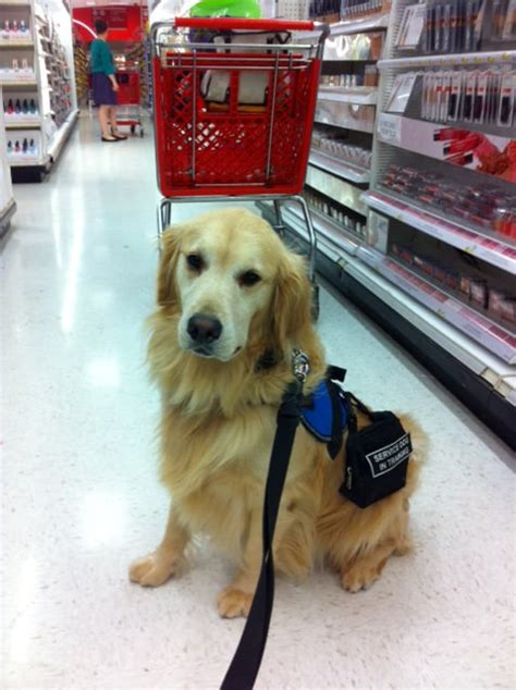 what do service dogs do fast facts assistance dogs 101 mobility