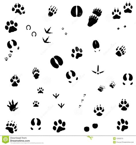 printable animal feet animal foot prints royalty free stock photo image 12352575